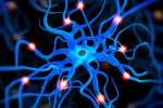 Primera Cátedra de Neuroeducación en España