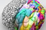 Cátedra de Neuroeducación UB-Edu1st